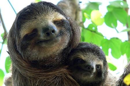 Sloth Smiling Sloth smiling